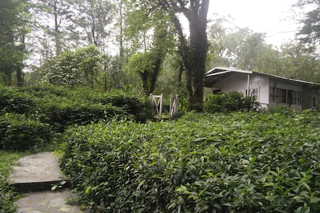 Eucalyptus Cottage at Tea Garden in Palampur - Palampur