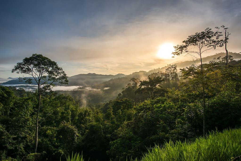 Sunrise at Rest.Pause. Rainforest Retreat