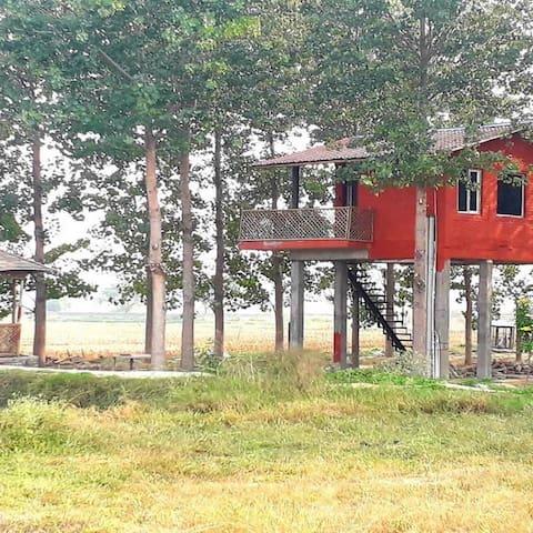 Chahal Tree Farm House Amritsar