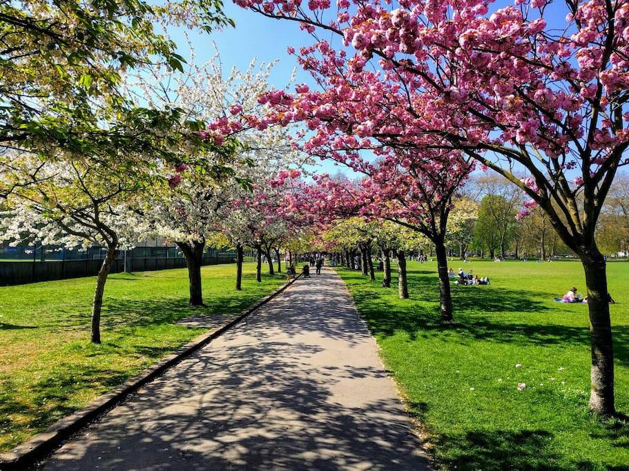 Battersea Park (1 minute walk)