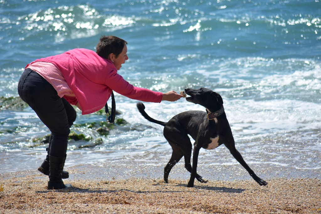 Hosts and dogs love to walk at Penrose or the beaches every day!