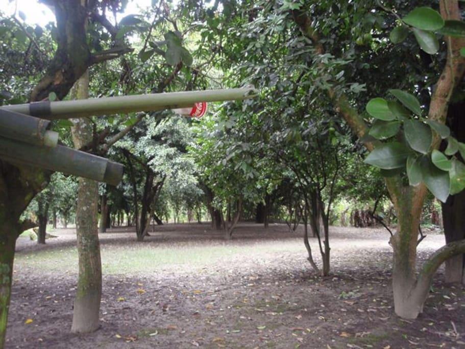 CON AREA DE ÁRBOLES FRUTALES