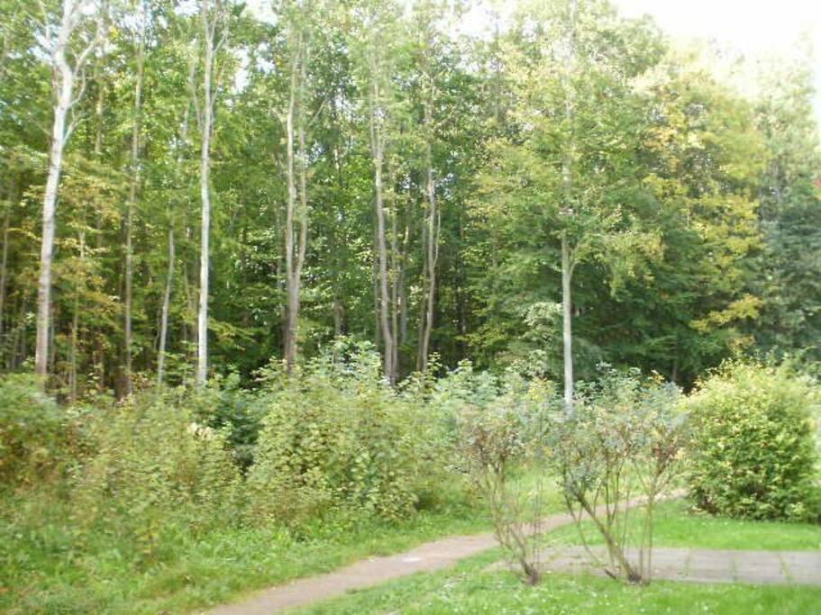 Hiking Trail behind Building / Wanderpfad Anbindung hinterm Haus