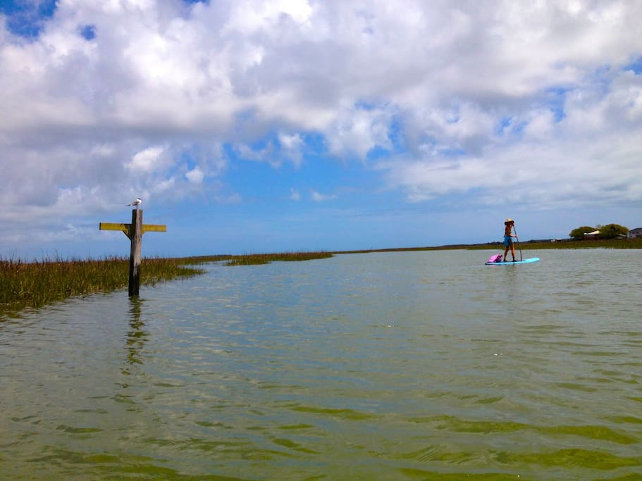 Explore the tranquil waters of the marsh.