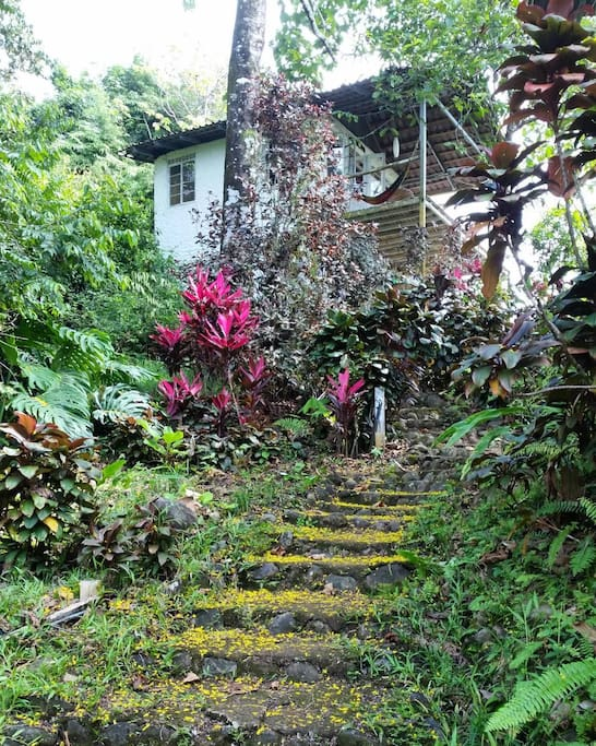 Lushness of property during Costa Rican winter