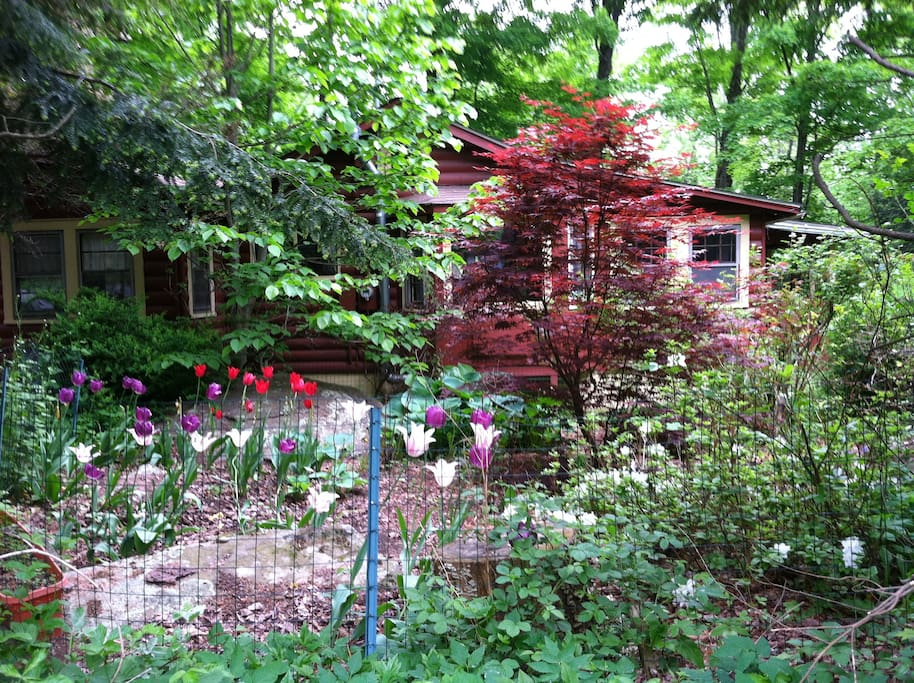 The cabin is cloaked in lush greenery during the warm months.