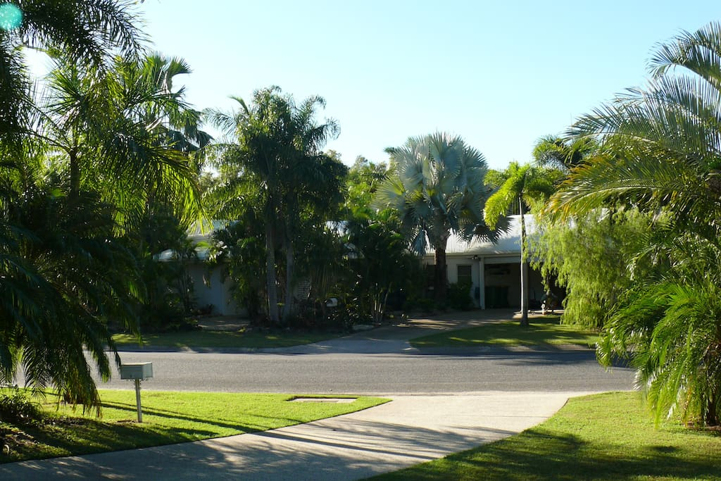 Beautiful tropical flora and fauna. looking into Yule Avenue from my front patio