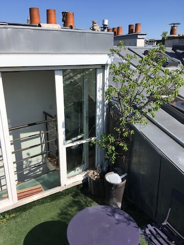 Apricot tree on the rooftop space (7th floor)