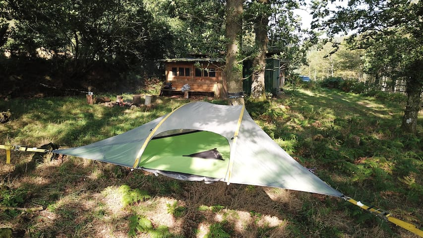 A Tentsile Stingray Tree-Tent Woodland Experience