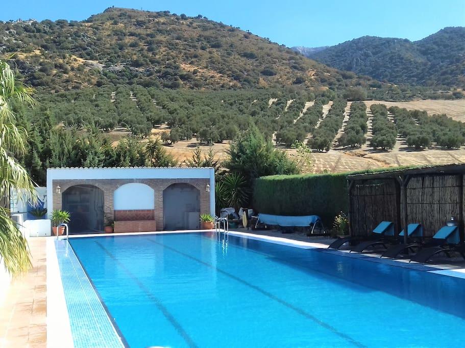 heated 25 metres pool