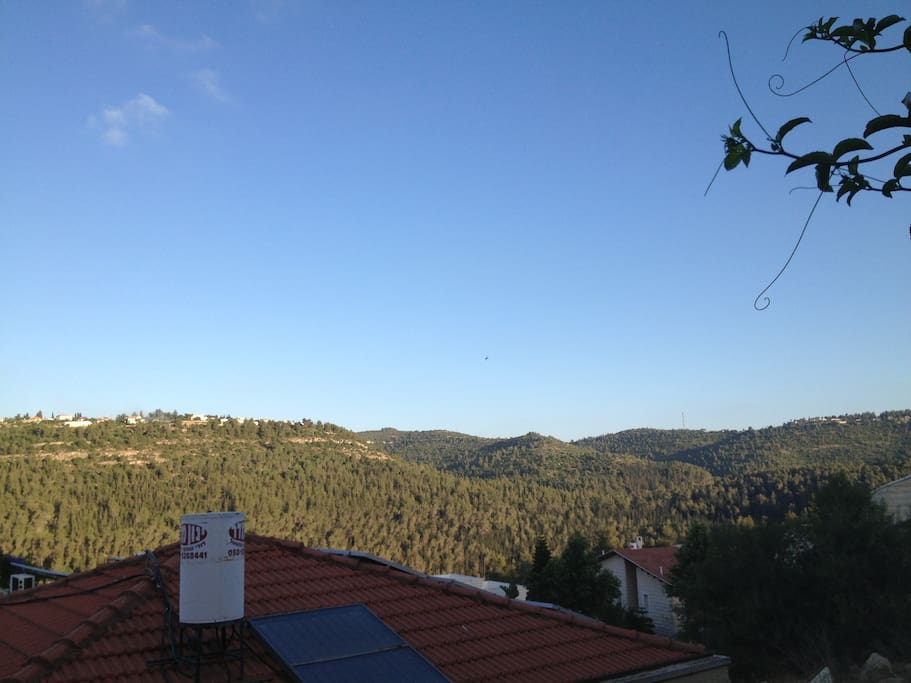 The appartment's view
