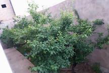 Un coté du jardin