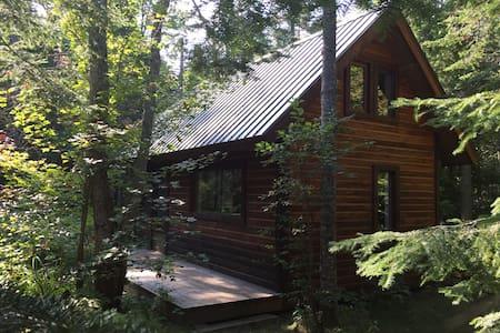Refuge récréatif dans la forêt