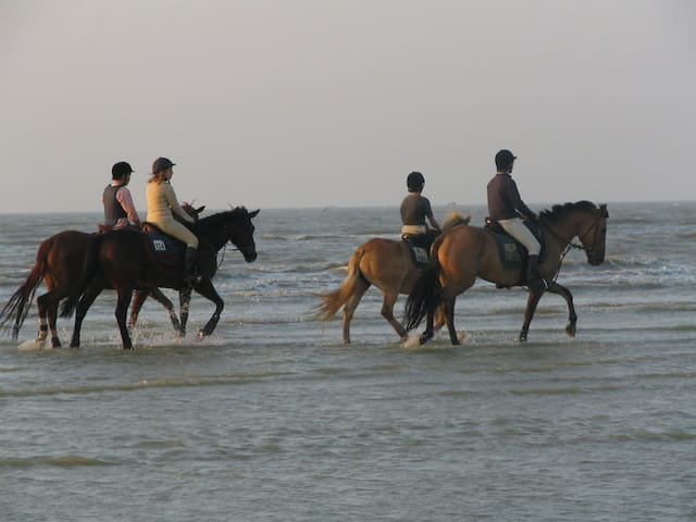 You will always see horses on the beach an even in the sea