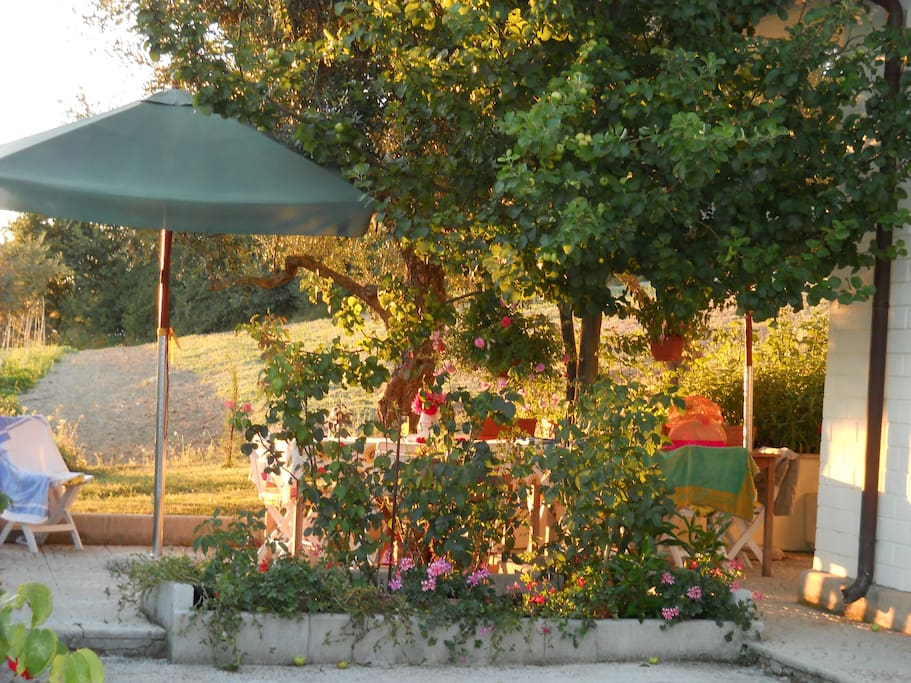 Dine outside under majestic olive trees with a view of the valley