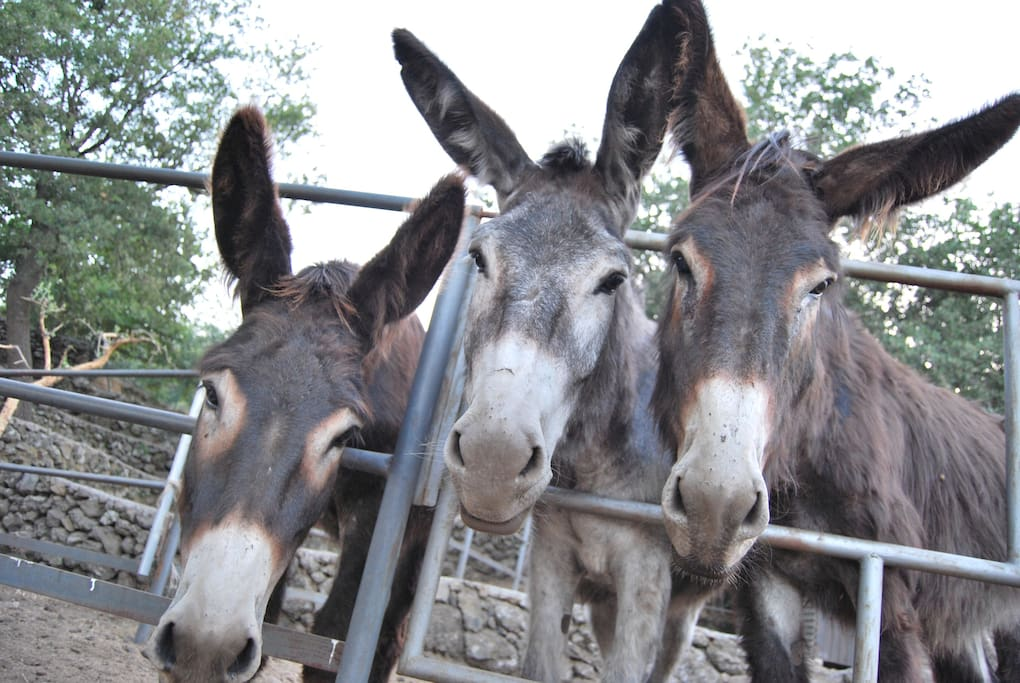 Our donkeys