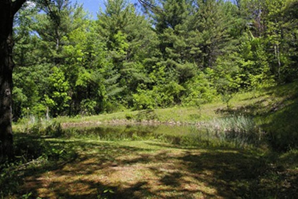 pond on property for viewing wildlife. Not suitable for swimming.