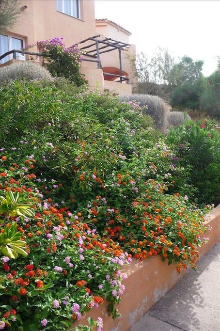 Green Gardens Surround The Properties