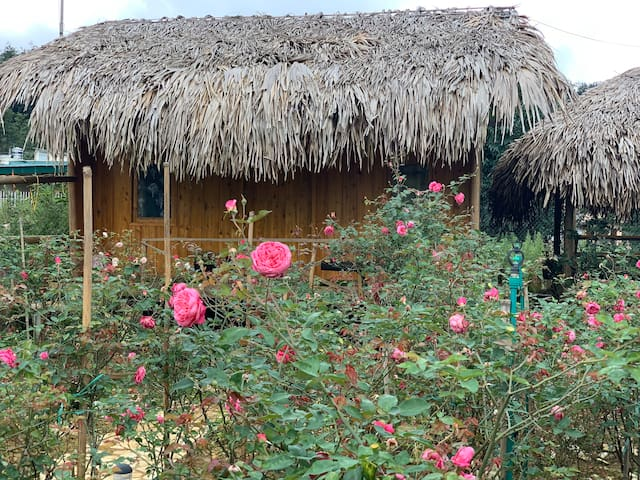 Biggest rose garden in Sa Pa Town