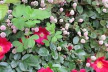 De oude muurtjes begroeid met prachtige bloemen