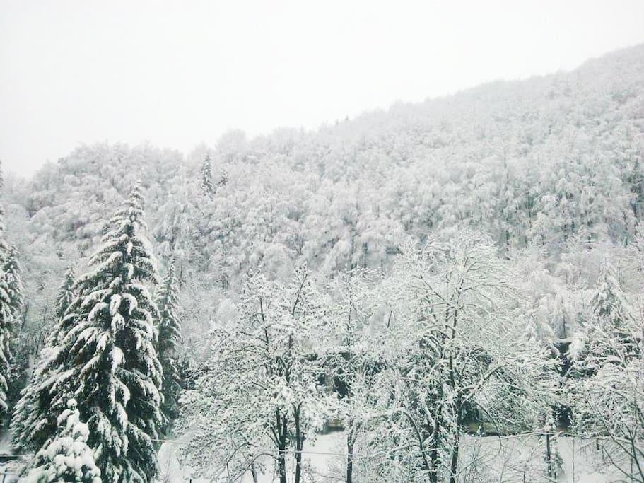 il panorama dal soggiorno con il bosco e la montagna