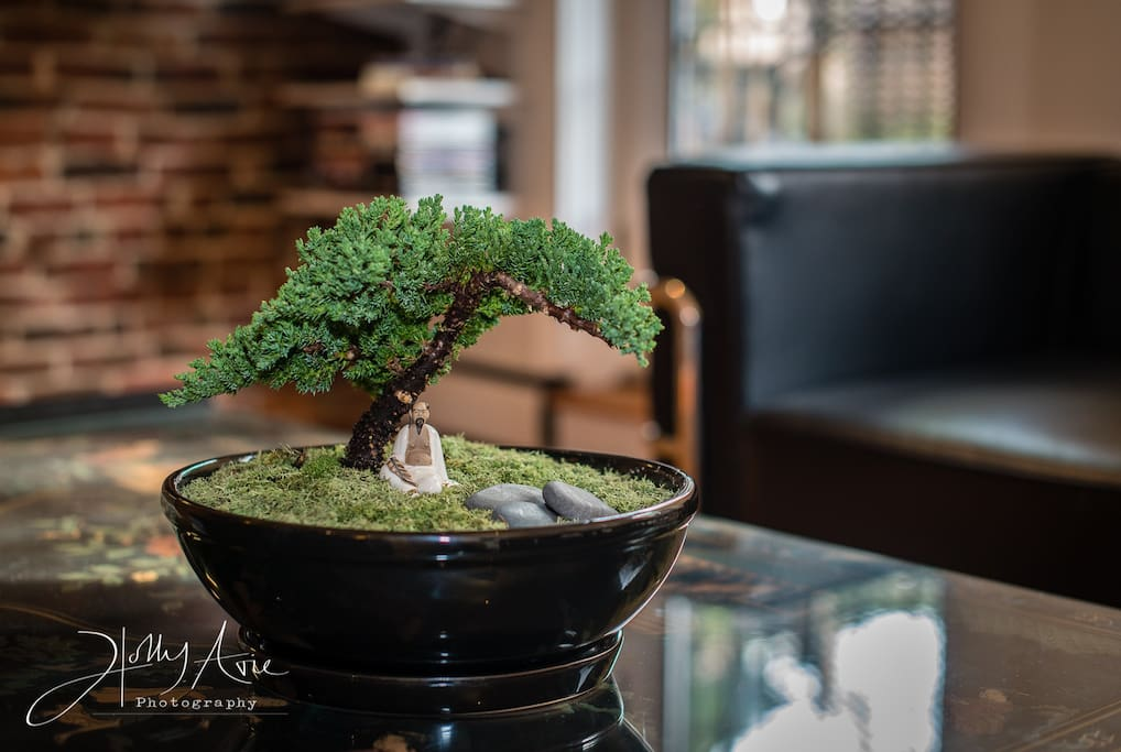 Bonsai on Chinese Black Laquer Coffee Table