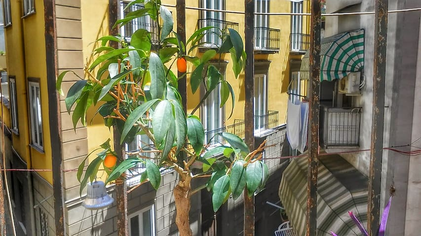Sunny room at the best location (historical cntr) - Napoli - Apartmen