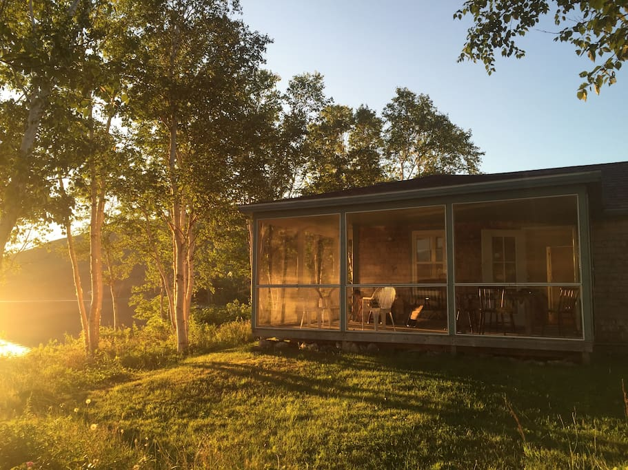 Sun rise through the birch trees and the porch.