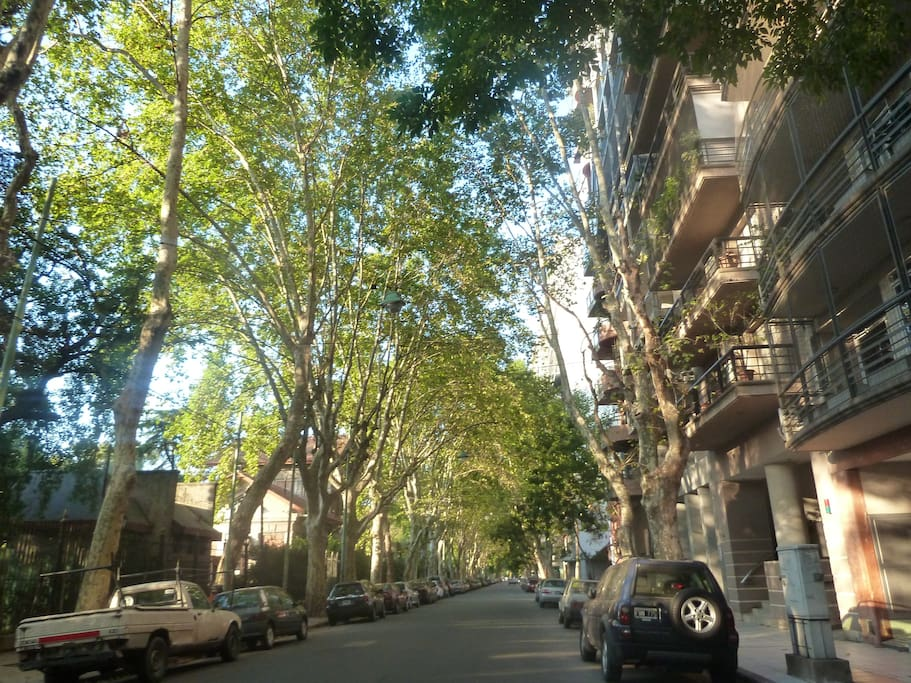 A unique tree-lined street where the apartment is situated(on the right)