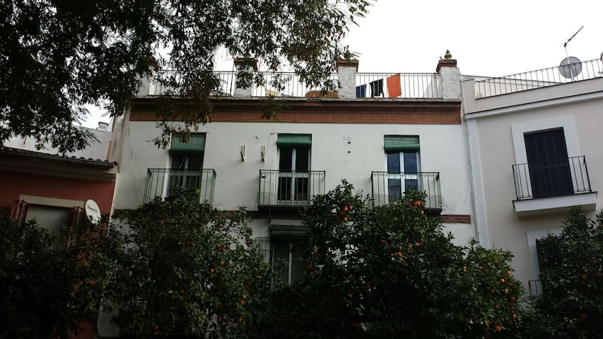 Vive Sevilla en Alameda de Hércules - Sewilla - Dom