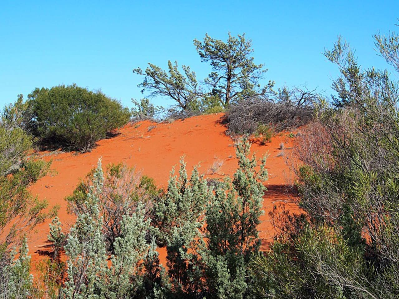 The Red Sands Desert Lounge