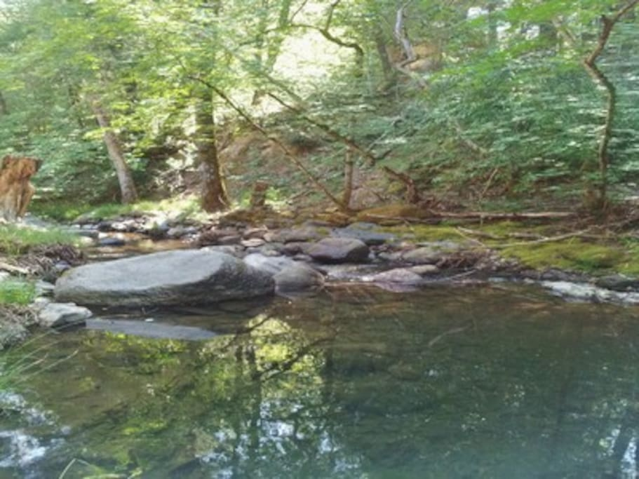 A view of the creek from the cabin