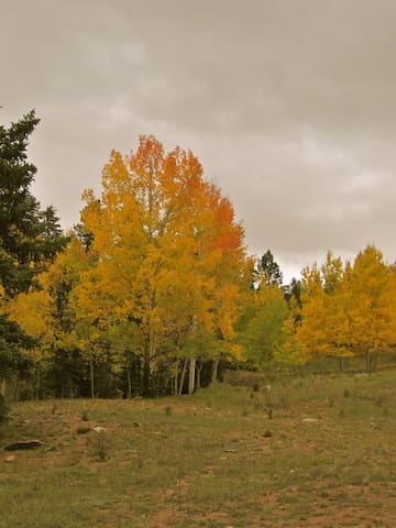 Aspen in the fall around the cabin and Cripple Creek!
