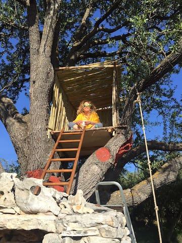The tree-house
