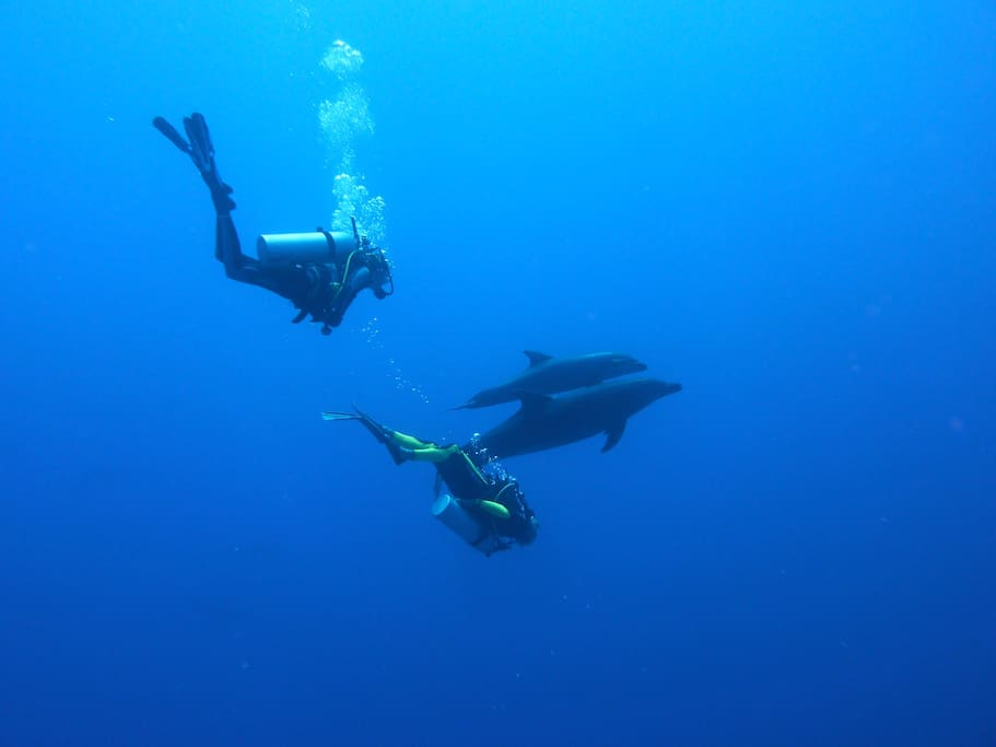 Come dive with us. And get certified with Guillaume :)
