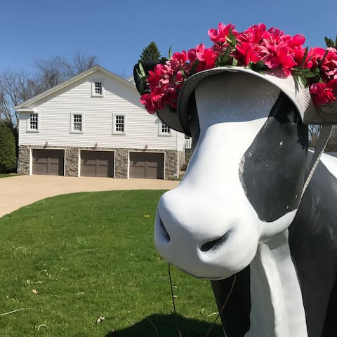 Our Resident Cow Moola