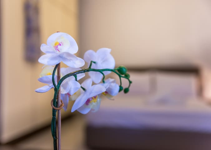 the white orchid symbolizes elegancy,homeliness and beautifulness...like the house