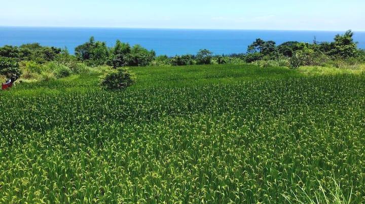 禾艾尚。長濱。 背包客   東海岸的長濱,位於金剛山腳下,面對蔚藍色的太平洋,是個隱蔽純樸的小村落。
