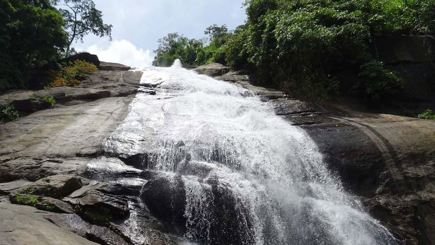 Thusharagiri Falls a must place to visit and if you are looking for Trekking this is the place.