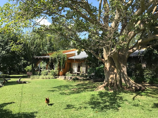 Under the Fig Tree - White River - Casa