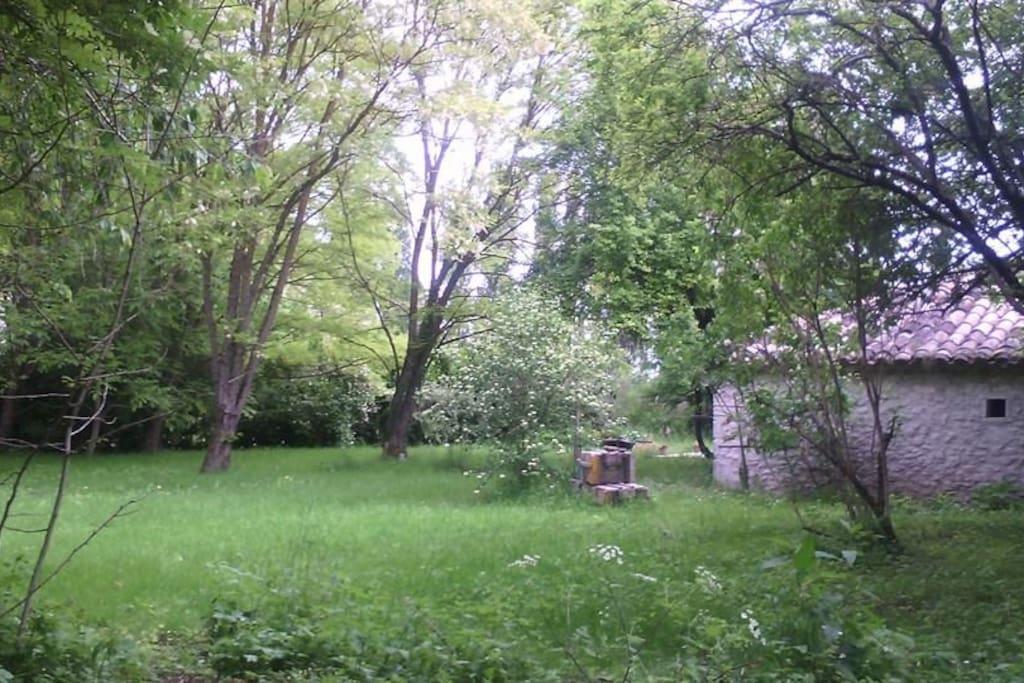 Notre jardin ombragé pour les étés chaud