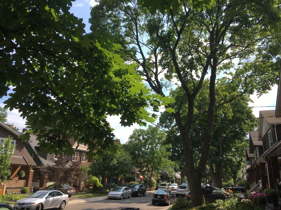 Taking in the attractions and excitement of the city is easy with a calm retreat to return to.  Our home is nestled on this beautiful tree lined street with hundred year old maples, the best neighbours and a family friendly vibe.