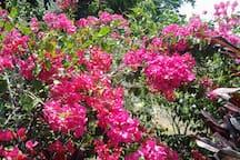 Colors of Grenada