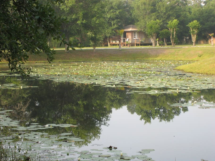 A view of the cabin and lily pond