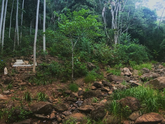 One of the many parts of our creeks being reforested ... new sitting area in progress :)