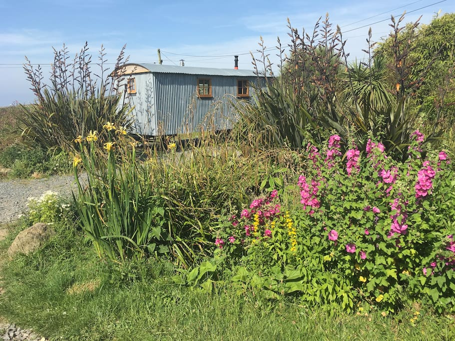 The hut is surrounded by wild flower planting