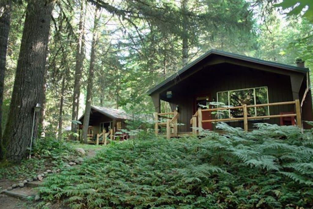 Private Cabins nestled in the trees