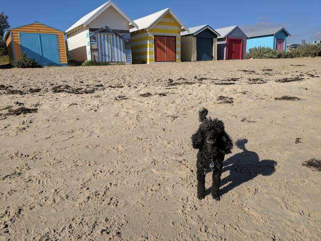 Tassels Cove Beach Boxes