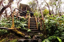This photo shows part of the ascent to the treehouse. There is a path, then boulders, than the ladder.