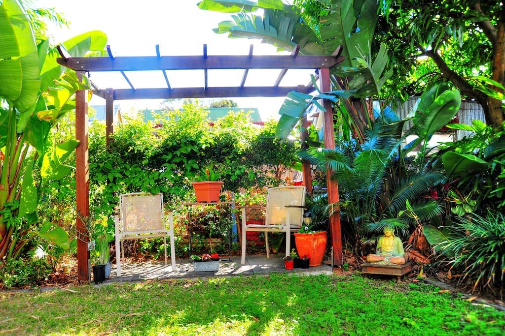The backyard is sometime home to fruit bats and possums raiding the mango tree.